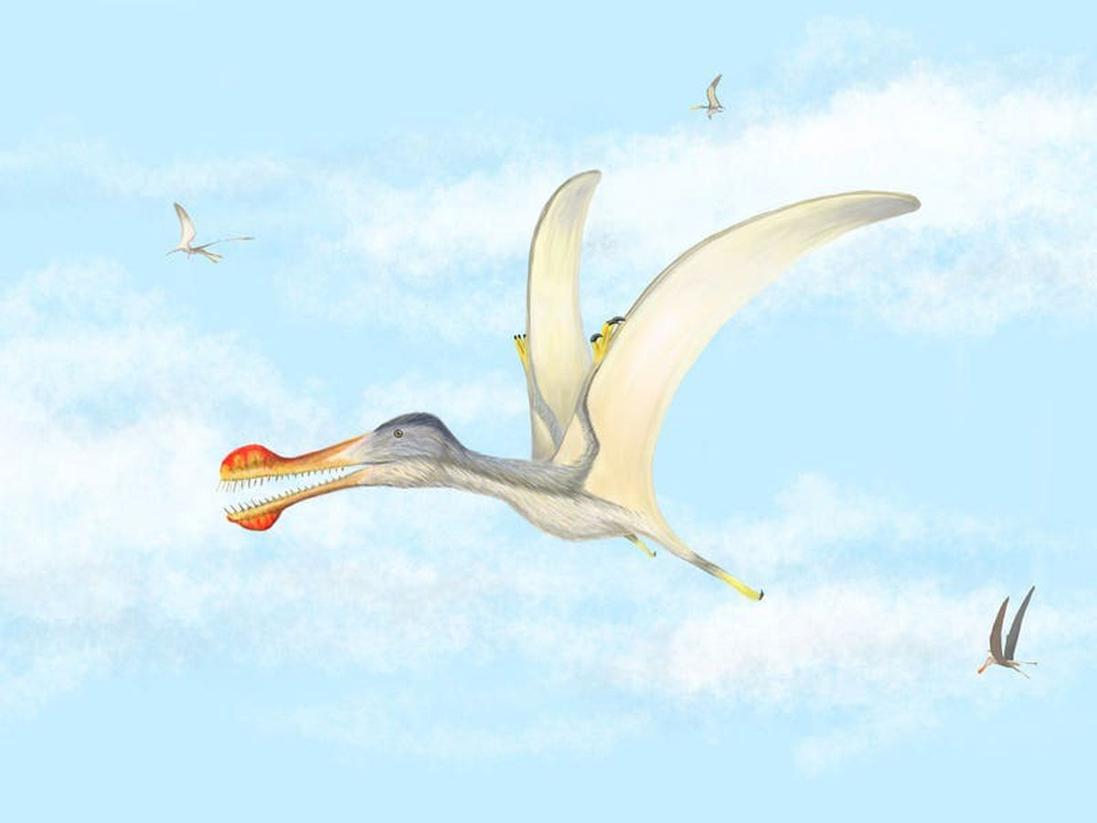 Newly-hatched pterosaurs may have been able to fly, according to study