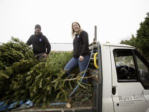 The Accidental Zoo's Ryan and Charlotte Le Guilcher will collect Christmas trees for a fee to be spent on the car of the animals and will also use the trees on their Castel site. (Picture by Adrian Miller, 29067555)