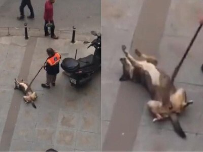 Watch: Street cleaner gives lovable dog a belly rub with his broom
