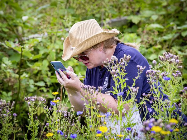 Liz Sweet, the manager of Guernsey Biological Records Centre, records a sighting on her phone. (Pictures by Sophie Rabey, 29802795)