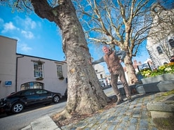 Backlash to parish's wish to remove tree in Trinity Square