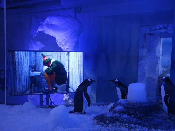 Penguins watch Christmas films to prepare for visitors returning after lockdown