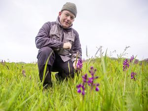 Picture by Sophie Rabey.  13-05-21.  La Societe's Bridget Ozanne Orchid Fields at St Peters are in bloom.  La Societe conservation officer Jamie Hooper talks to us about the different varieties of Orchid.. (29546104)