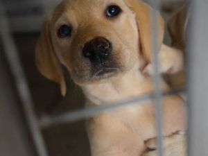 More than 138,000 people sign petition calling for stronger dog theft penalties