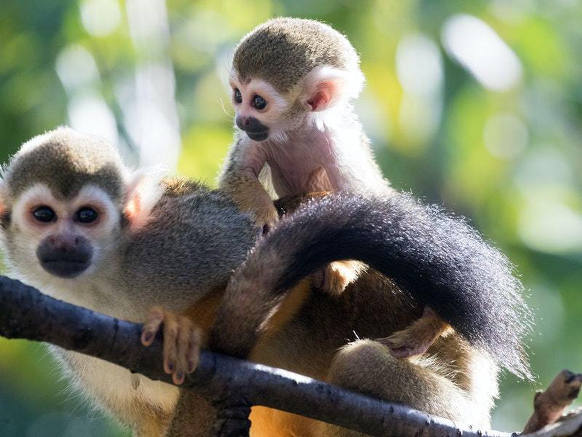 Government seeks to introduce pet monkey ban