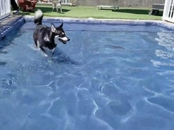 This dog can't swim but absolutely loves a paddling pool