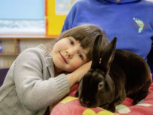 Picture by Sophie Rabey.  26-03-21.  Hillside Pre-school (St Andrew's) have 2 ducklings and a rabbit for the children..Faith Sarre (3) with rabbit Shaddow. (29375435)