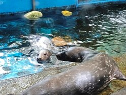 GSPCA seals together in 'household bubble'