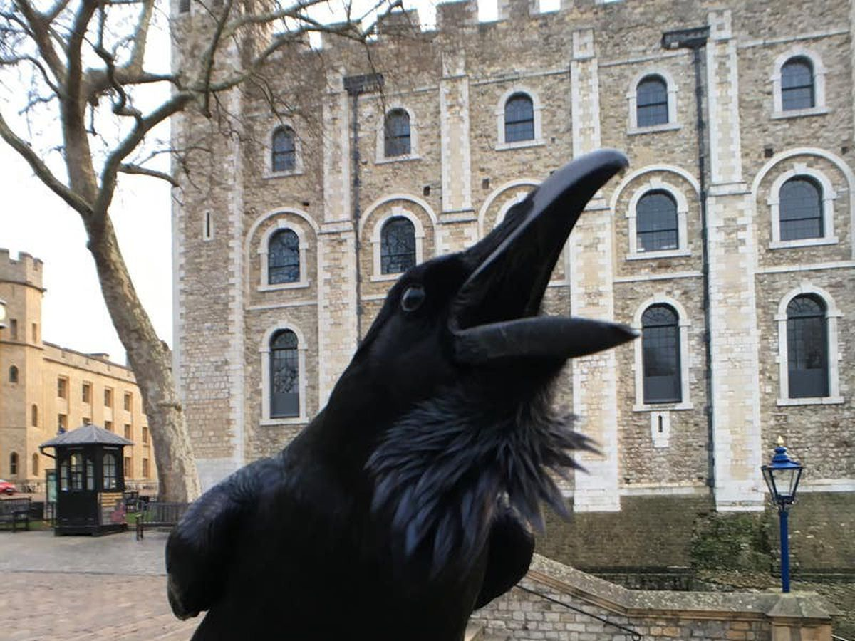 Tower of London mourns ruler of the roost 'queen' raven Merlina