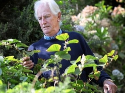 Knotweed 'needs to be dealt with, and quickly'