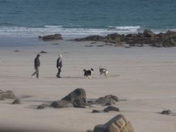 Dog owners warned of palm oil on coastline