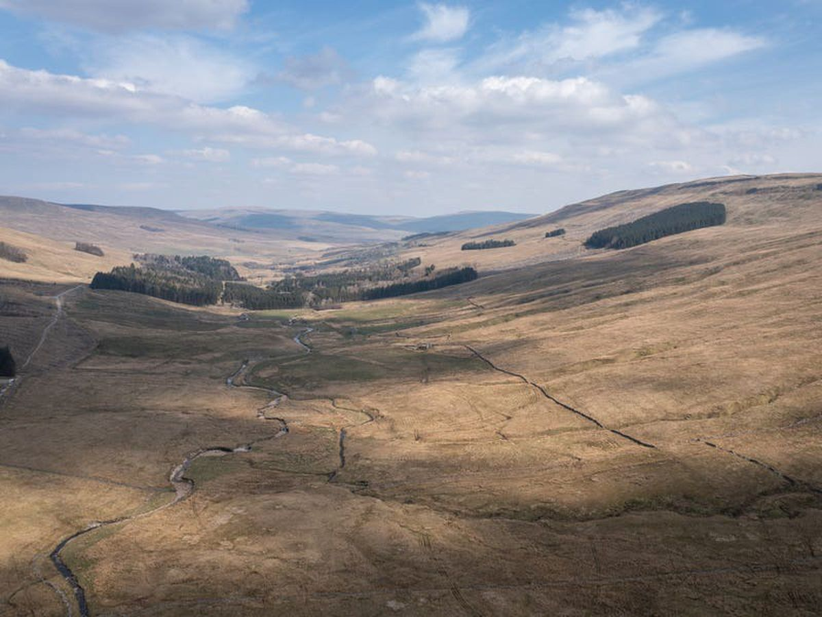 £3.5m bid to create new woodland in Yorkshire Dales