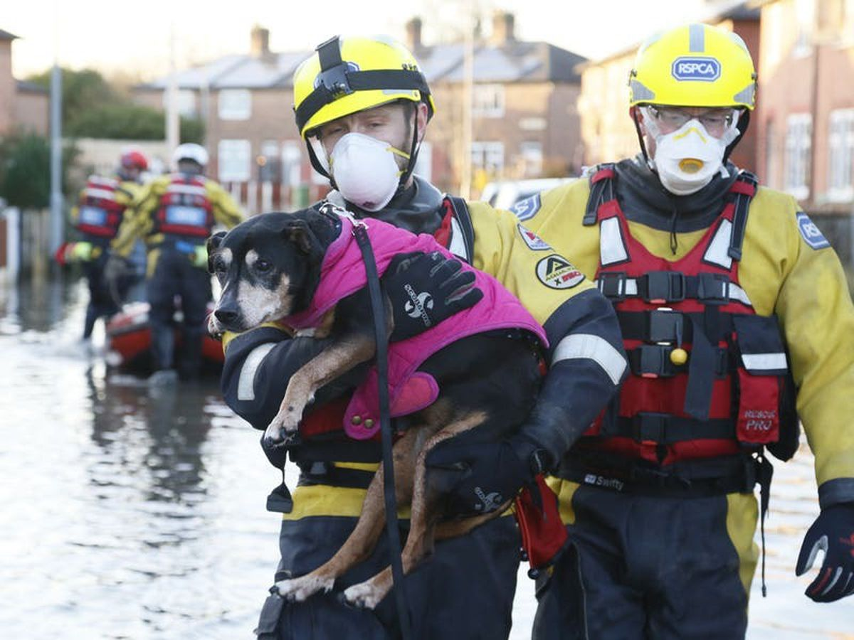 RSPCA launches missions to save animals from Storm Christoph flooding