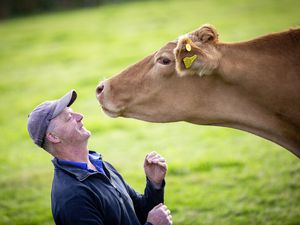 Jason Salisbury is running the farm on Sark on his own because his wife, Katharine, is still involved in their cheese-making business in Suffolk. (Picture by Sophie Rabey, 30066379)