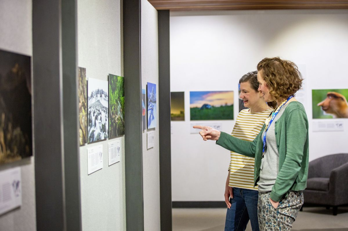 Guernsey Museum registrar Lisa Burton and access and learning manager Jo Dowding take in the exhibition. (29442499)