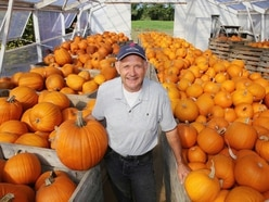 Long dry summer produces smaller but higher-quality pumpkins for grower Graham