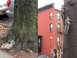 These two squirrels battling to reach the top of the tree is an extreme sport