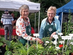 Busy time for Plant Heritage at autumn sale