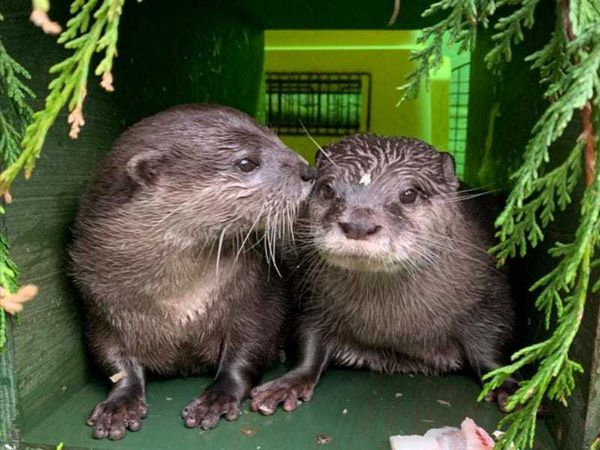 Four-legged pair are otterly in love after online matchmaking