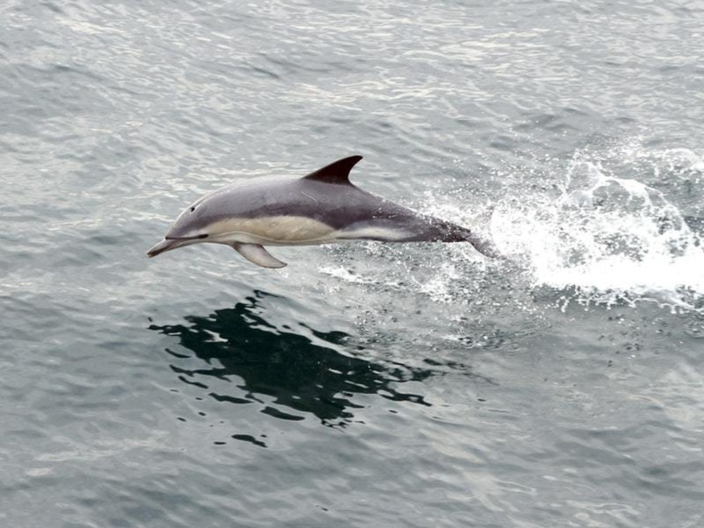 940005ac32de Record numbers of whale and dolphin sightings have been submitted to an  annual marine mammal monitoring event