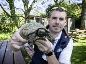 Pic by Cassidy Jones 27-04-21 GSPCA Manager Steve Byrne with a tortoise. Tortoises are more active this time of year and are escaping. (29486005)