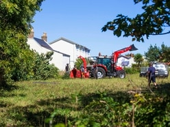 Felling of two trees on 'triangle field' did not breach order