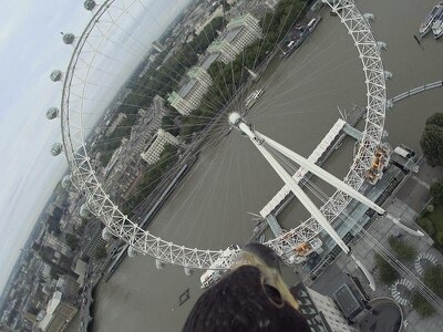 This camera strapped to an eagle gives a real life bird's eye view of London