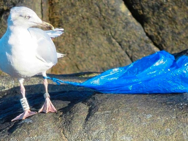 We can all help prevent birds ingesting plastic, says expert