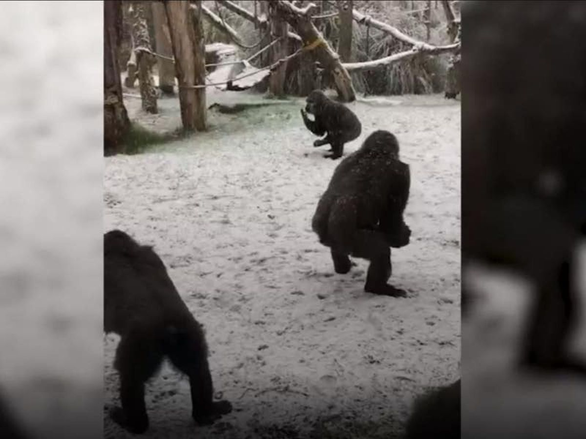 In Video: Animals enjoy the snow at London Zoo
