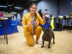 Dogs strut their stuff at Kennel Club show