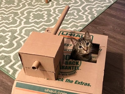 This former military man is making cardboard tanks for the cats he looks after
