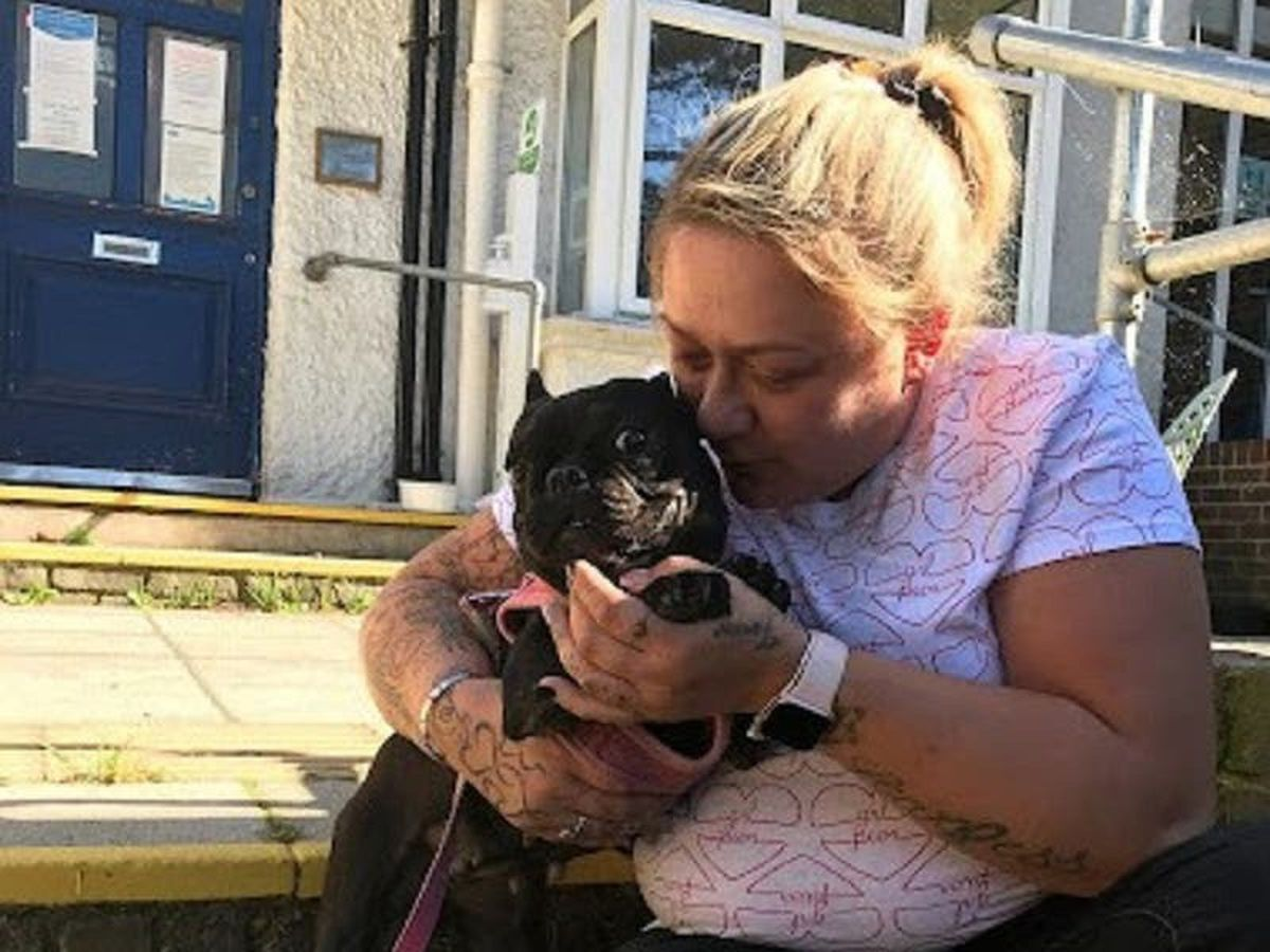 Dog owner 'so grateful' to reunite with stolen pet 160 miles away