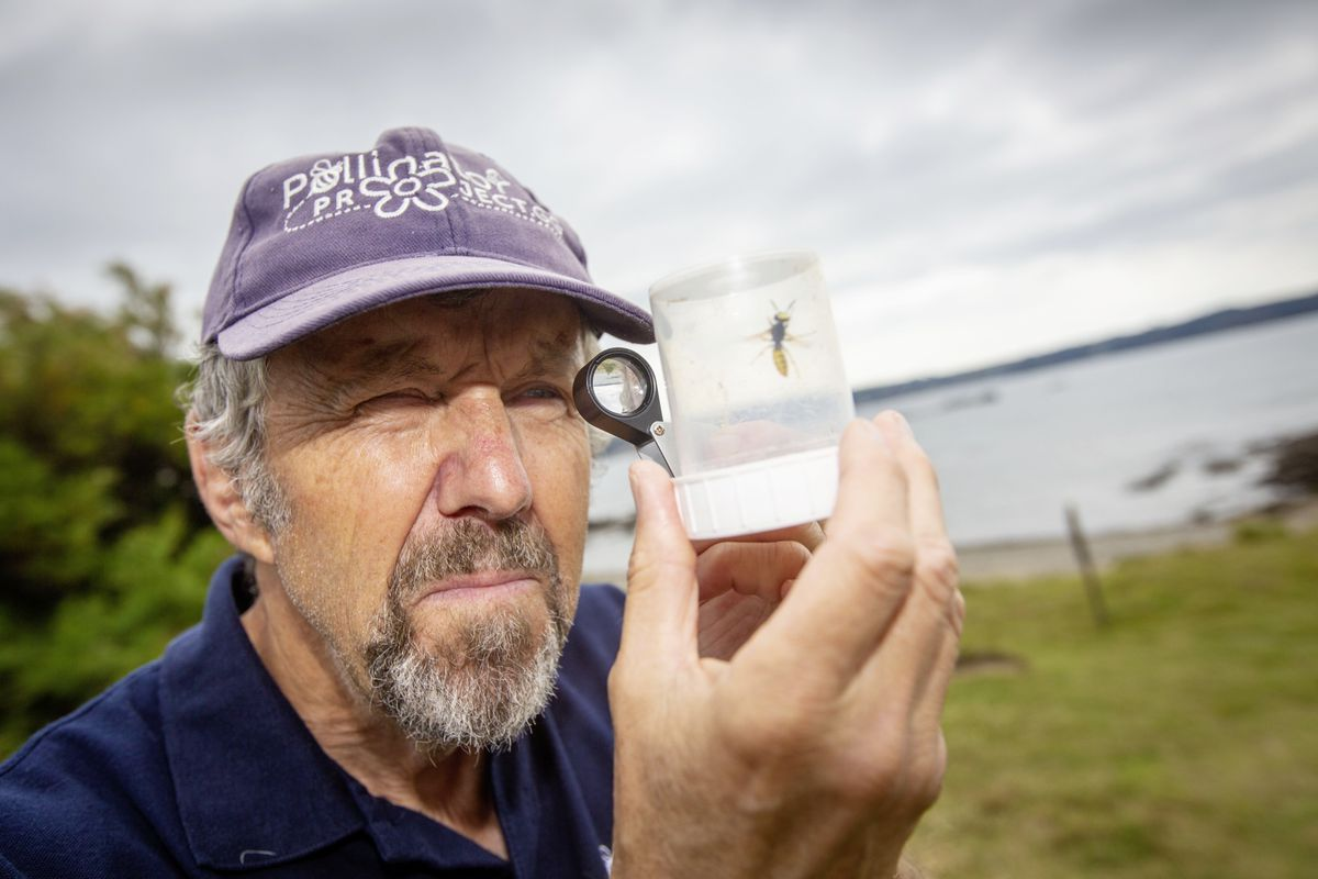Barry Wells is the co-founder of the Pollinator Project. (Picture By Peter Frankland, 29990060)