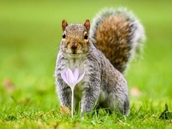 Paw preference makes squirrels 'less efficient at learning new tasks'