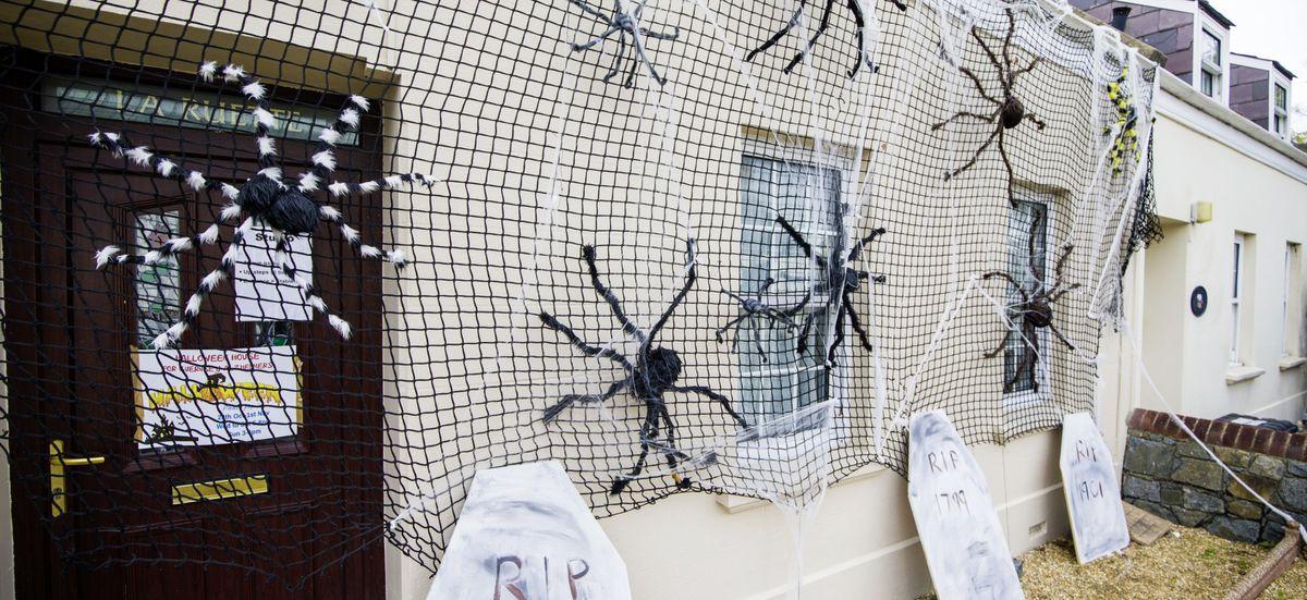 An arachnophobes worst nightmare. (28834035)