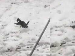 Watch: Cat struggles through the snow after trip to the vet