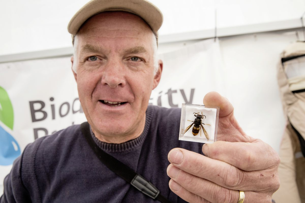 Francis Russell with the first ever Queen Asian Hornet found in Guernsey. (24661591)