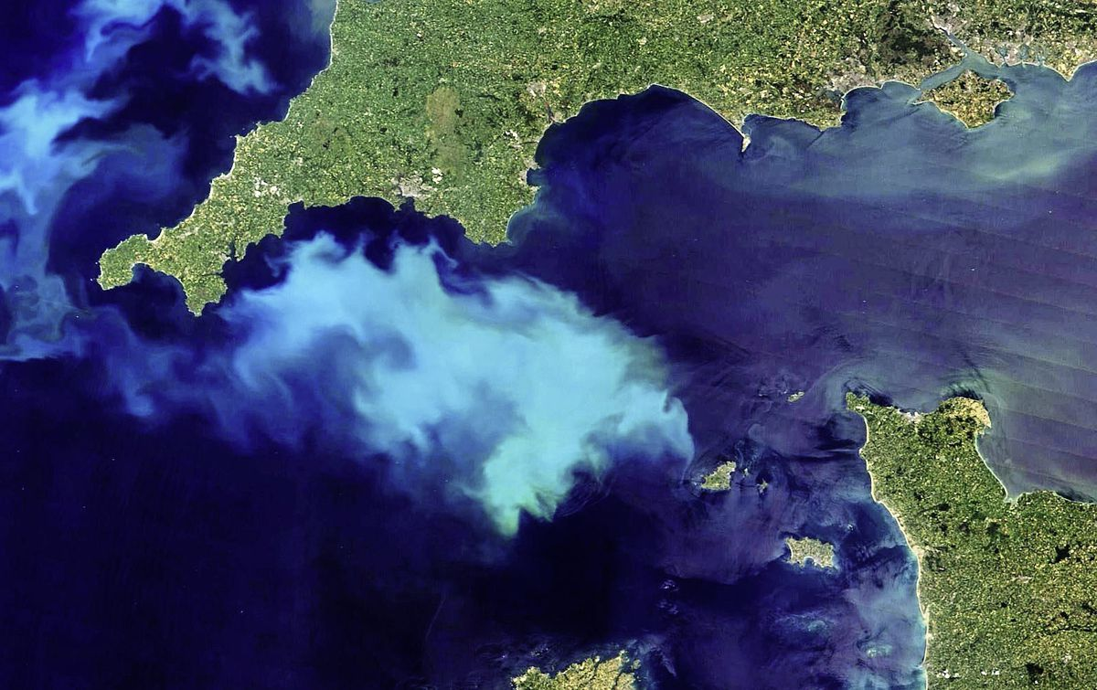 A massive bloom of phytoplankton has been recorded by NASA in the English Channel, not too far from Guernsey's west coast. It is due to the clear skies and heat in north-western Europe. (Image courtesy of NASA)