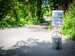 Ducklings' lives made safer by road sign
