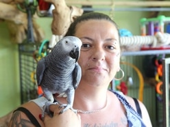 Pet owner now desperate to find Twinkle the parrot
