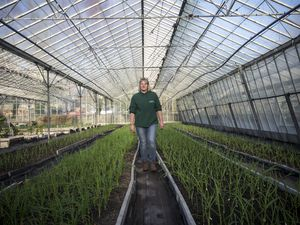 Pic by Adrian Miller GROW St Sampson's. Tour of GROW. On Friday they were granted permission to redevelop the vinery site, with no conditions attached. Assistant manager Jess Aughton amongst the crops.. (29660738)