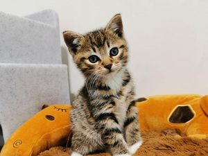 The Government has launched a public consultation on compulsory microchipping for cats (29078912)