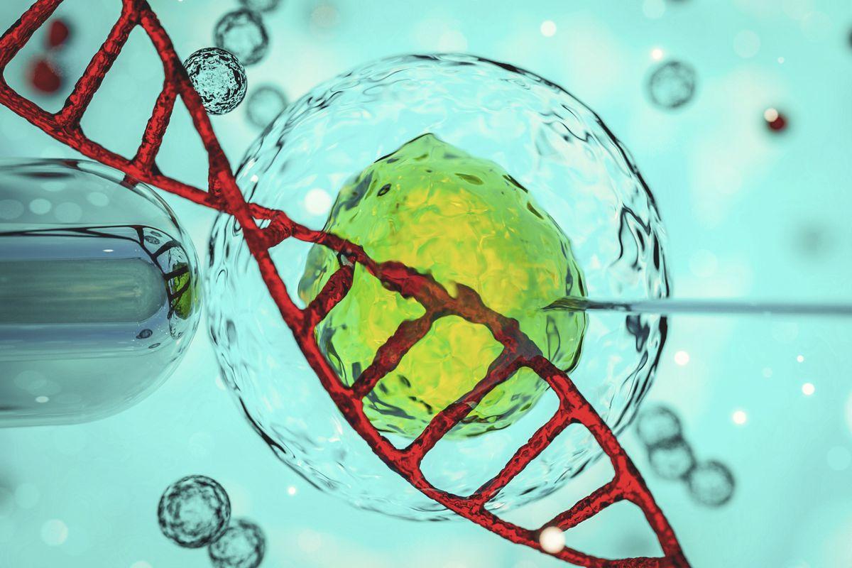In vitro fertilisation under microscope. (29454065)