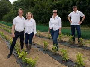 The Jersey Tea Company's Cardin Pasturel, Michelle Pasturel, Katherine Boucher and Terry Boucher in the tea fields at Warwick Farm in St Helier
