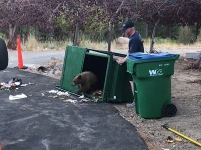 Watch the moment a fire crew saved three bear cubs from an overturned bin