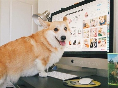 Enjoy the brilliant pictures from Take Your Dog To Work Day