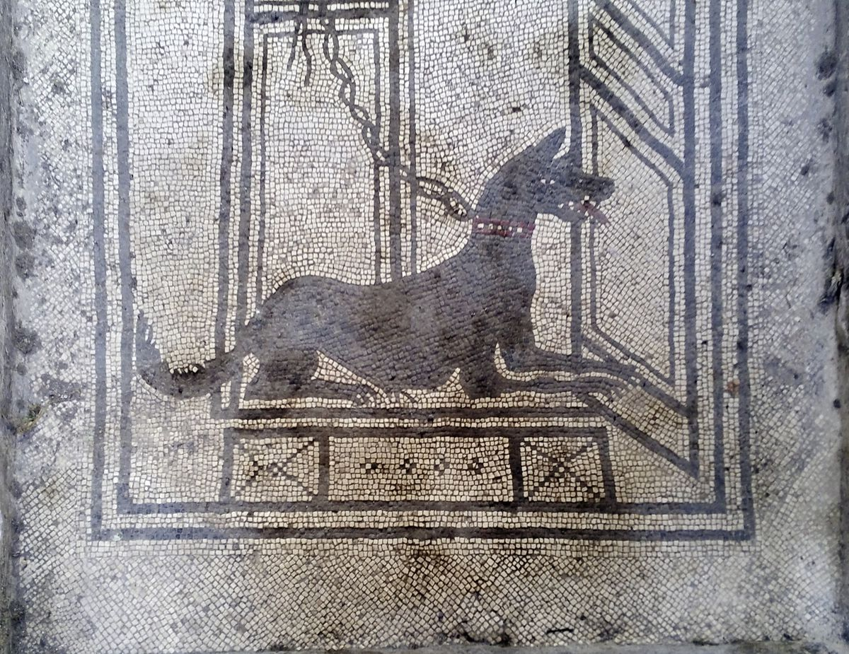 A mosaic of a dog in Pompeii.  (Image supplied by Nich Hogben)